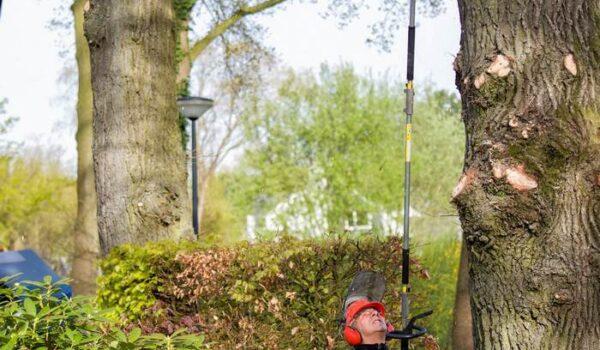tree service expert